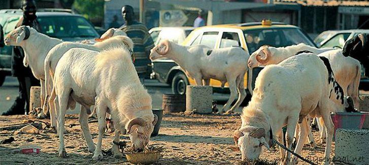 Point de vente de moutons