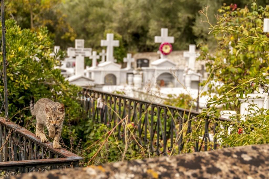 Chat dans un cimetière - pixabay.com
