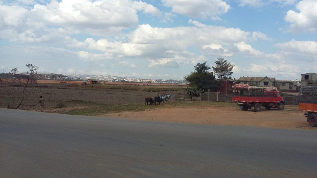Antananarivo : zébus au repos devant une charrette - Photo : Roger Mawulolo