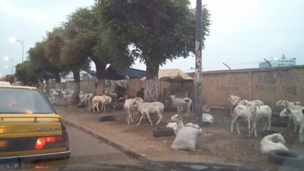 Vente de moutons à Dakar - Photo : Roger Mawulolo
