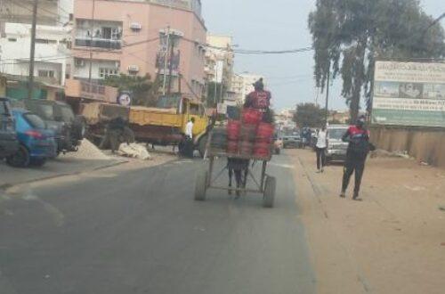 Article : Au Sénégal, les charrettes sont de véritables véhicules utilitaires
