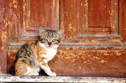 Article : Dakar, un paradis pour les chats