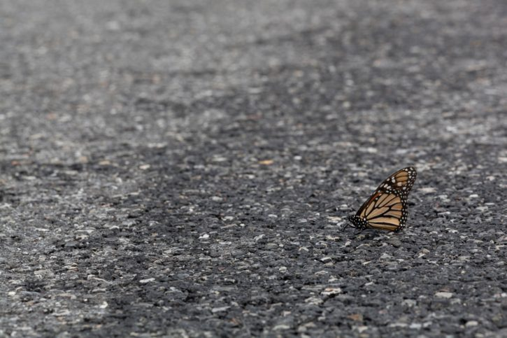Un papillon sur l'asphalte - Image libre : https://pixnio.com