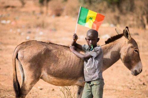 Article : Coupe du monde 2018 : le Sénégal, un petit tour puis s'en va