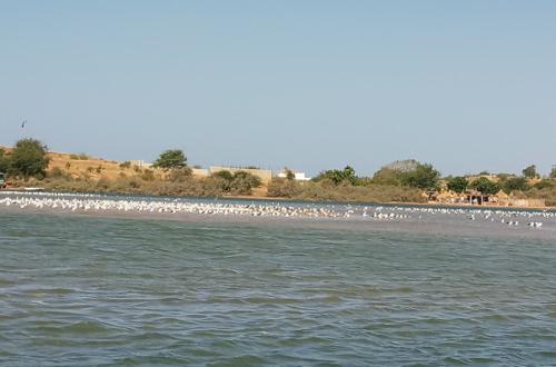 Article : Sénégal : escapade sur la lagune de la Somone
