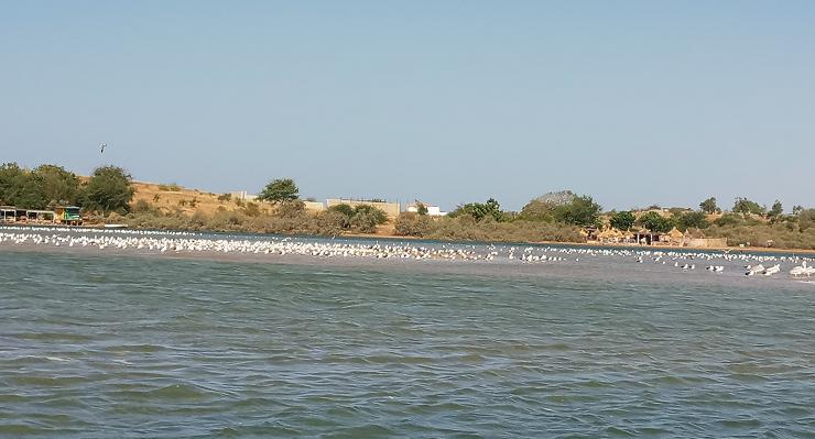 Lagune de la Somone : des oiseaux sur un banc de sable - Photo : Roger Mawulolo