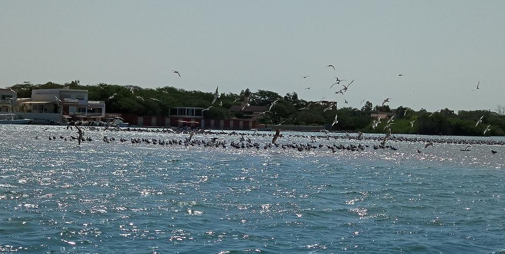 Des oiseaux sur la lagune de la Somone - Photo : Roger Mawulolo