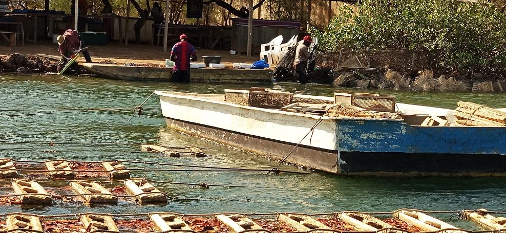 Somone : le parc à huîtres - Photo : Roger Mawulolo